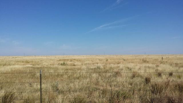 Where the buffalo used to roam, New Mexico.