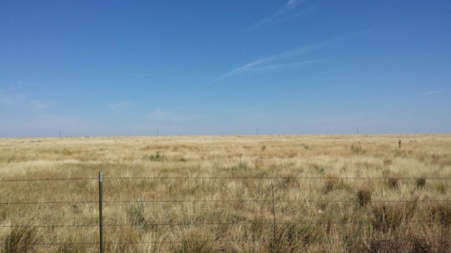 Where the buffalo used to roam, New Mexico.