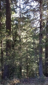 In the Umpqua National Forest. This is what I picture when I hear forest.