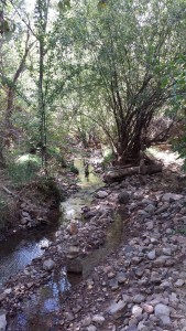 The Santa Fe River, flows below the Upaya Zen Center. Apparently 'river' is another word like 'forest' or 'tree' that doesn't tell you much.