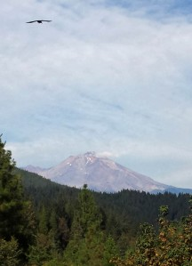 First glimpse of Mount Shasta, coming out of California.